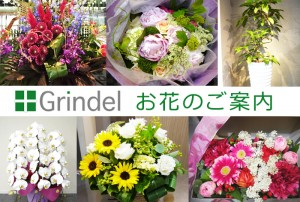 お花屋グリンデルお花の案内